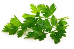 Bunch fresh parsley Stock Photo