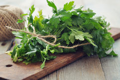 Bunch of fresh parsley Royalty Free Stock Image