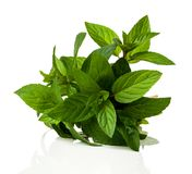 A bunch of fresh peppermint. On a white background Royalty Free Stock Image