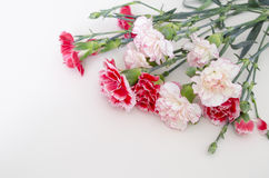 Bunch of fresh pink carnations on a light tablecloth. Horizontal format. Cut beautiful spring flowers. Mother`s Day background. To stock photo