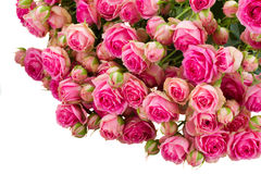 Bunch of   fresh pink roses Royalty Free Stock Image