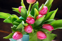 Bunch of fresh pink tulips Royalty Free Stock Photography