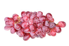 Branch of fresh purple grape Stock Images
