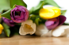 Bunch of fresh purple, yellow and white tulip flowers close up. Soft focus and bokeh. Colorful tulips Stock Images
