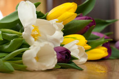 Bunch of fresh purple, yellow and white tulip flowers close up. Soft focus and bokeh. Colorful tulips Royalty Free Stock Photos