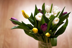 Bunch of fresh purple, yellow and white tulip flowers in a vase close up. Natural Stock Images