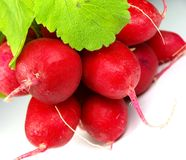Bunch of fresh radish Stock Images