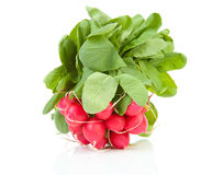 Bunch of fresh radish. Over white background Stock Images