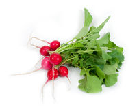 Bunch of fresh radish Stock Photography
