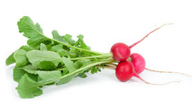 Bunch of fresh radish. On white background Royalty Free Stock Photo