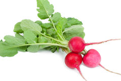 Bunch of fresh radish Royalty Free Stock Image