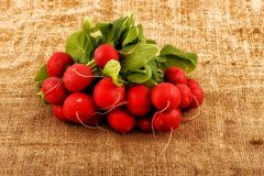 Bunch of fresh radish. On the organic texture of canvas Royalty Free Stock Photos