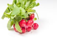 Bunch of fresh radish Stock Image