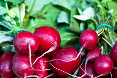 Bunch of fresh radish Royalty Free Stock Images
