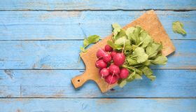 Bunch of fresh radish Stock Photography