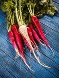 Bunch of fresh radish. Close-up of a big bunch of fresh radish Stock Image