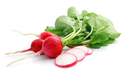 Bunch fresh radish with cut. Isolated on white background Royalty Free Stock Image