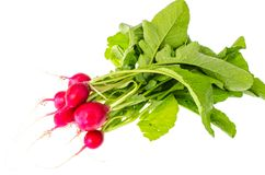 Bunch of fresh radish with green leaves on white front. Studio Photo Royalty Free Stock Photos