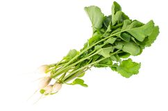 Bunch of fresh radish with green leaves on white front. Studio Photo Stock Image