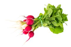 Bunch of fresh radish with green leaves on white front. Studio Photo Royalty Free Stock Photography