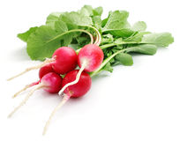 Bunch fresh radish isolated Stock Photography