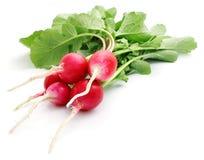 Bunch fresh radish isolated. On white background Stock Photography