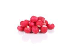 Bunch of fresh radish. Stock Image