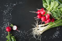 Bunch of fresh radish on slate dish. Top view. Copy space. Bunch of fresh radish and onion on black dish. Top view. Copy space. Close up Stock Images