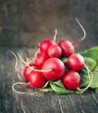 Bunch of fresh radish. Royalty Free Stock Photos