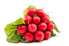Bunch of fresh radish on white background. Bunch of fresh radish isolated on white background Stock Images