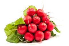 Bunch of fresh radish on white background. Stock Images