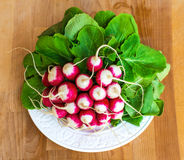 Bunch of fresh radish on white plate closeup, wooden background. Red natural european radishes. Freshly harvested organic vegetables Stock Photos