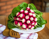 Bunch of fresh radish on white plate closeup, wooden background. Red natural european radishes. Freshly harvested organic vegetables Royalty Free Stock Image