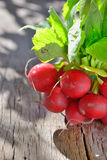 Bunch of fresh radish. On wood Royalty Free Stock Image