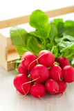 Bunch of fresh radishes. On the table Stock Photos