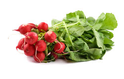 Bunch of fresh radishes Stock Photo