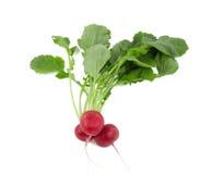 Bunch of fresh radishes Royalty Free Stock Photography