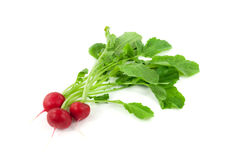 A bunch of fresh radishes Royalty Free Stock Image