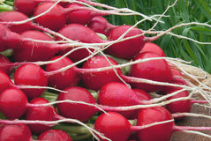 A bunch of fresh radishes from the garden against the background. Of grass Royalty Free Stock Photo