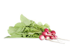 Bunch of fresh radishes Stock Photos