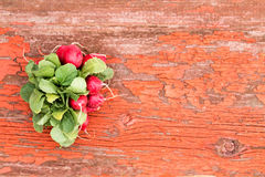 Bunch of fresh radishes and leaves. Bunch of fresh red crispy radishes with their edible leaves lying on a grungy rustic wooden board with cracked peeling paint Royalty Free Stock Photography