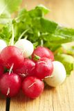 Bunch of fresh radishes on old wooden table. Bunch of fresh red and white radishes on old wooden table Royalty Free Stock Photography