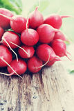 Bunch of fresh radishes, tinted Royalty Free Stock Photo