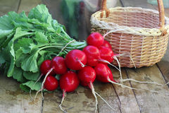 Bunch of fresh radishes with tops. And trash on a wooden platform Royalty Free Stock Photo