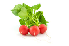 A bunch of fresh radishes on white. Background Stock Photography
