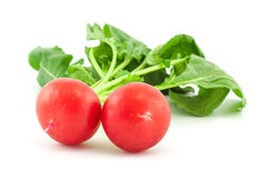 A bunch of fresh radishes on white. Background Royalty Free Stock Photos
