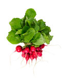 Bunch of fresh radishes  on white background. Top view Royalty Free Stock Image