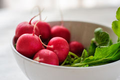 Bunch of fresh radishes in white bowl on white board Stock Image