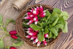 Bunch of fresh radishes in a wicker basket outdoors on the table Royalty Free Stock Photo