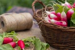 Bunch of fresh radishes in a wicker basket outdoors on the table. Bunch of fresh radishes in a wooden box outdoors on the table Stock Image